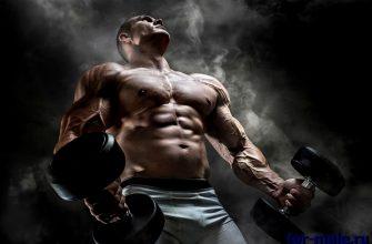 анаболизм белков у мужчин