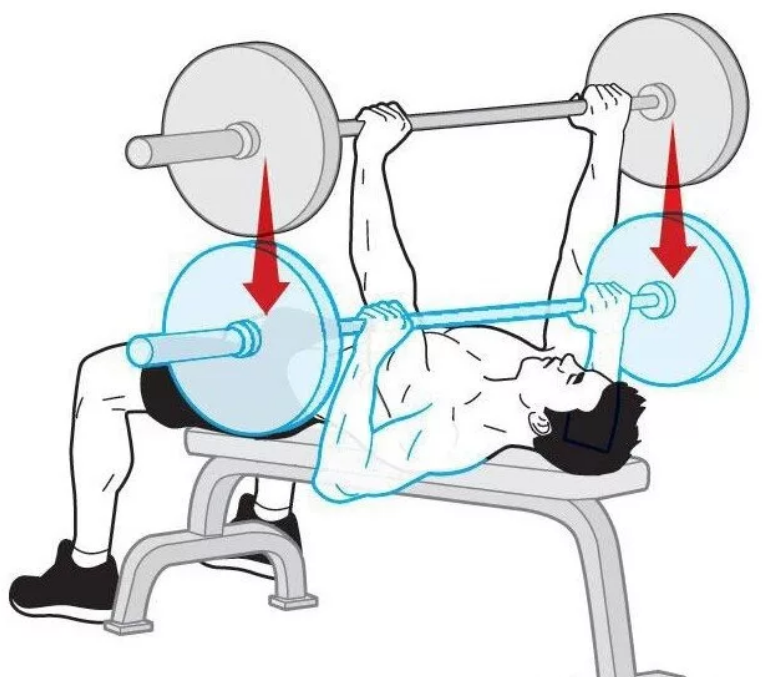 Как накачать грудь мужчине штангой