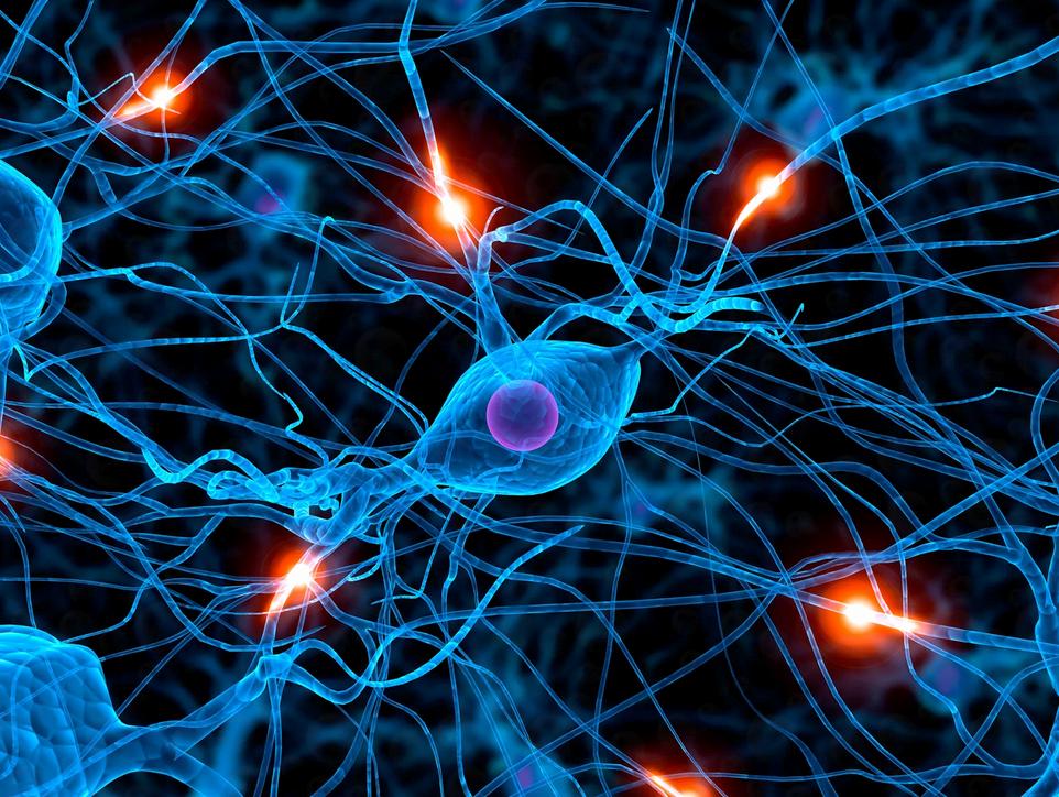 нейроны мышечной памяти