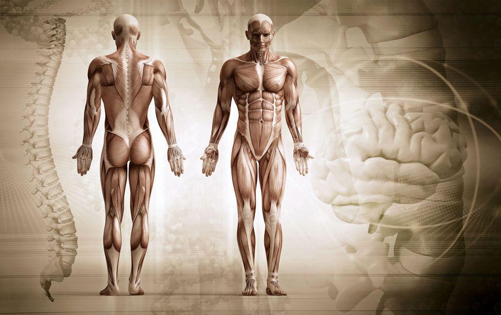 мышечная память в теле